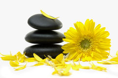 Flower and stones. Macro of spring yellow flower with plants on stones Royalty Free Stock Photography