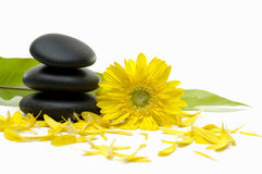 Flower  and stones. Zen pebbles and green banana leaf with flower petals Stock Image