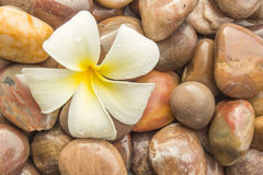 Flower and stones. Beautiful yellow flowers placed on the stone Stock Photos
