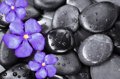 Flower and stones. Blue flowers on the black wet stones stock photography