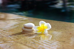Flower and stones in hotel spa Royalty Free Stock Image