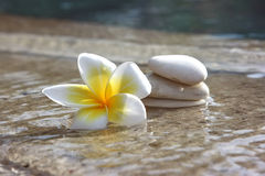 Flower and stones in hotel spa Royalty Free Stock Images