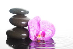 Flower and stones in water royalty free stock images
