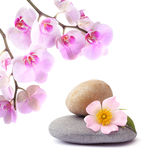 Flower and stones on a white isolated backg Royalty Free Stock Photography