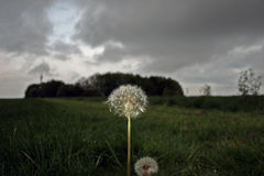 Flower in a Storm Stock Photography