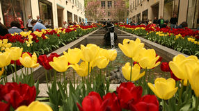 Flower Street at N.Y. City Royalty Free Stock Photography