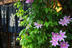Flower of the street. Scenery of the red flower of the street and the green leaf Stock Images