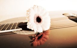 Flower on strings, close-up. Flower on guitar strings, close-up, suggesting desire for a relationship Stock Photography