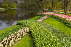 Flower strip of flowers in the park at Keukenhof Royalty Free Stock Photo