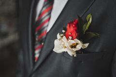 Flower in a suit pocket 2482. Royalty Free Stock Photos