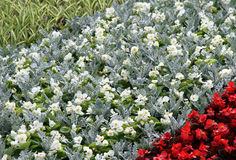 Flower summer bed in a garden. Stock Image