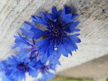 Flower. Summer blue flowers Stock Photo