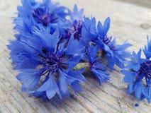 Flower. Summer blue flowers Royalty Free Stock Image
