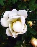Flower. Summer, flower, love Royalty Free Stock Photography