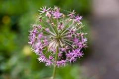 Flower royalty free stock image