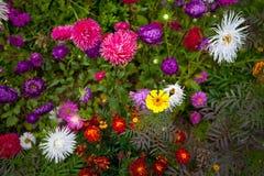 Flower. Summer sun herb green Royalty Free Stock Image