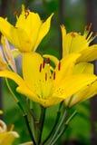 Flower. Summer sweet Stock Photos