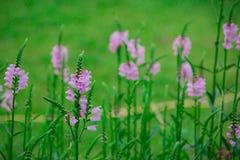 Flower. Summer sweet Stock Photo