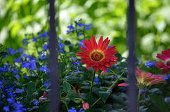 Flower in summer time Royalty Free Stock Images