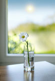 Flower and sun. Vase with a flower with the sun in the background stock photos