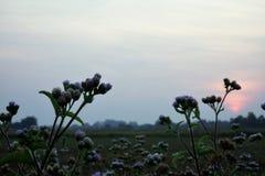 Flower&Sun Royalty-vrije Stock Afbeelding