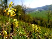Flower in the sun. Flower sun neckar nature yellow royalty free stock photography