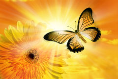 Flower Sun Sky Butterfly. A butterfly flying through a sunny sky with a yellow Gerbera flower in the background Stock Photos