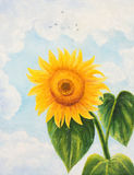 The flower of a sunflower on a background of clouds. Oil painting Royalty Free Stock Photos