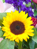 Flower of sunflower Stock Image