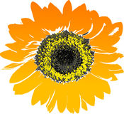 Flower, Sunflower, Flowering Plant, Yellow stock photography