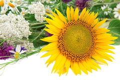 Flower of sunflower and other wildflowers stock images