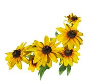 Flower, Sunflower, Yellow, Flowering Plant royalty free stock image