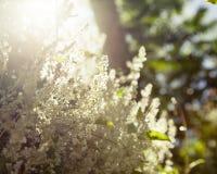 Flower Sunlight Stock Photography