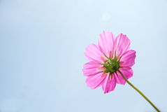 Flower. A flower in sunny day Royalty Free Stock Photography