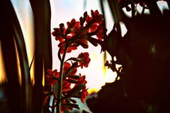 Flower. In the sunset Royalty Free Stock Photo