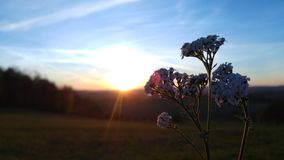 Flower Sunset. A beautiful Flower with a Sunset in the Background Royalty Free Stock Photo
