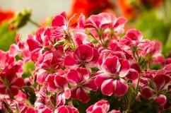 Flower2. Flower on the sunset, bellflower and iris Royalty Free Stock Image