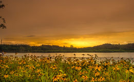 Flowers at sunset. Flowers on sunset sky background Stock Images