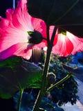 Flower. Sunset lighted the flower Royalty Free Stock Image