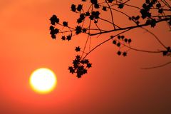 Flower in sunset Stock Photography