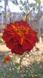 Flower royalty free stock photos