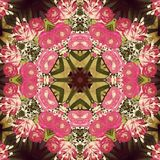 Flower symmetry. Pink rose symmetry Stock Images