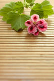Flower on the table. Pink flower on the brown mat Stock Photography