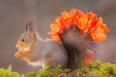 Flower tail Royalty Free Stock Photography