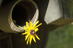 Flower in a Tailpipe. Flower in an exhaust-pipe of a modern car, concept of environment and ecology Royalty Free Stock Photo