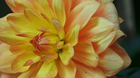 Flower taken in the Arboretum UK Royalty Free Stock Photo