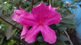 Flower I just opened in the garden. royalty free stock photos