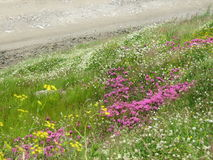 Flower tapestry in Ladakh-2 Royalty Free Stock Photography