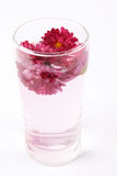 Flower tea Stock Image