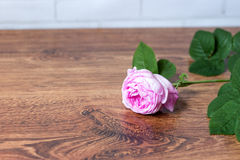 Flower tea rose buds on old wooden table Royalty Free Stock Image